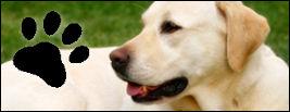 Chien dressé par un éducateur dresseur canin