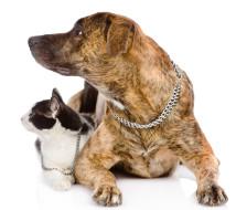 formation d'assistant vétérinaire