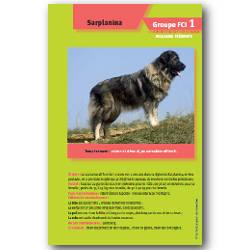 formation d'auxiliaire vétérinaire
