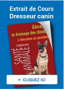cours dresseur canin