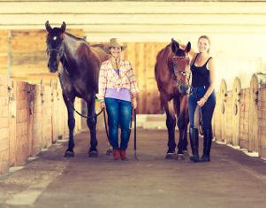 Elevage et soin de chevaux