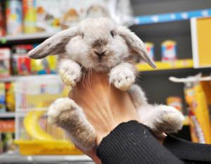 formation vendeur animalier