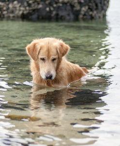 Chien dans l'eau qui regarde un poisson