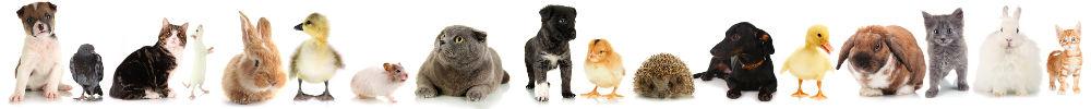 Certificat de capacité pour animaux