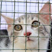 Chat en cage à la SPA
