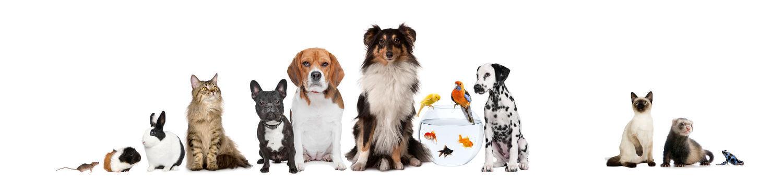 bandeau conseiller animalerie