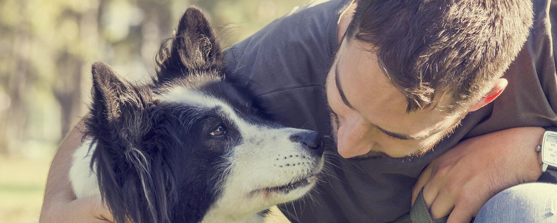 bandeau-educateur-canin