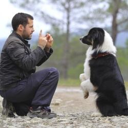 educateur dresseur canin