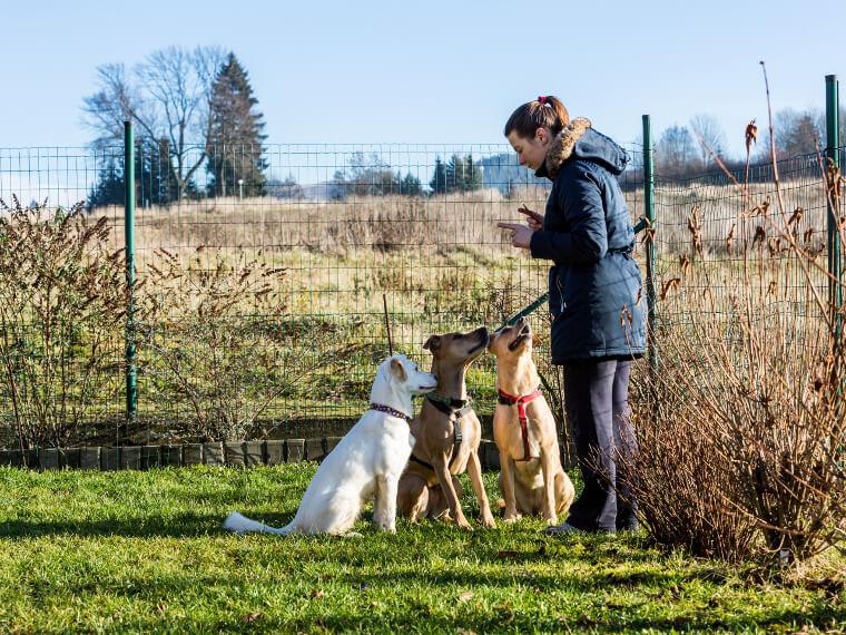 métier éducateur dresseur canin