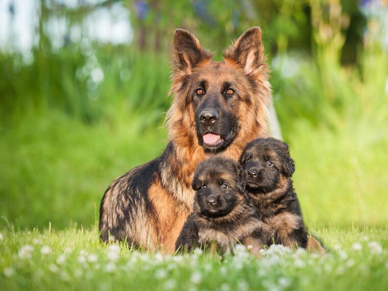 métier éleveur canin