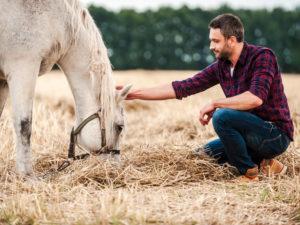 métier éleveur équin
