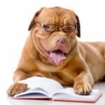 Comprendre les bases de l'éducation d'un chien