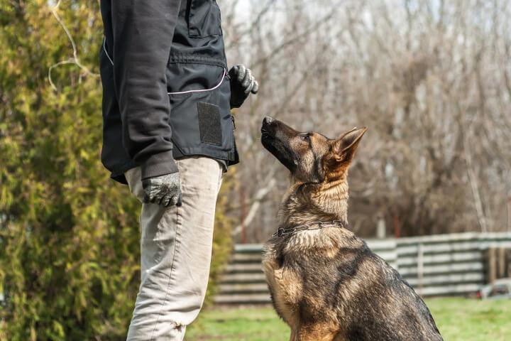 devenir éducateur canin