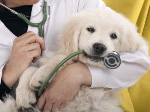 formation auxiliaire vétérinaire