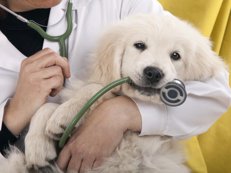 formation assistant vétérinaire