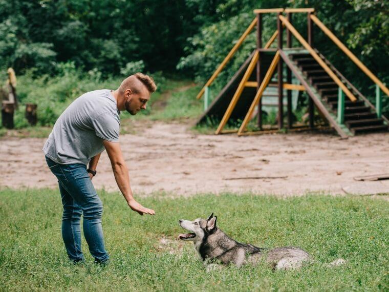éducateur dresseur canin