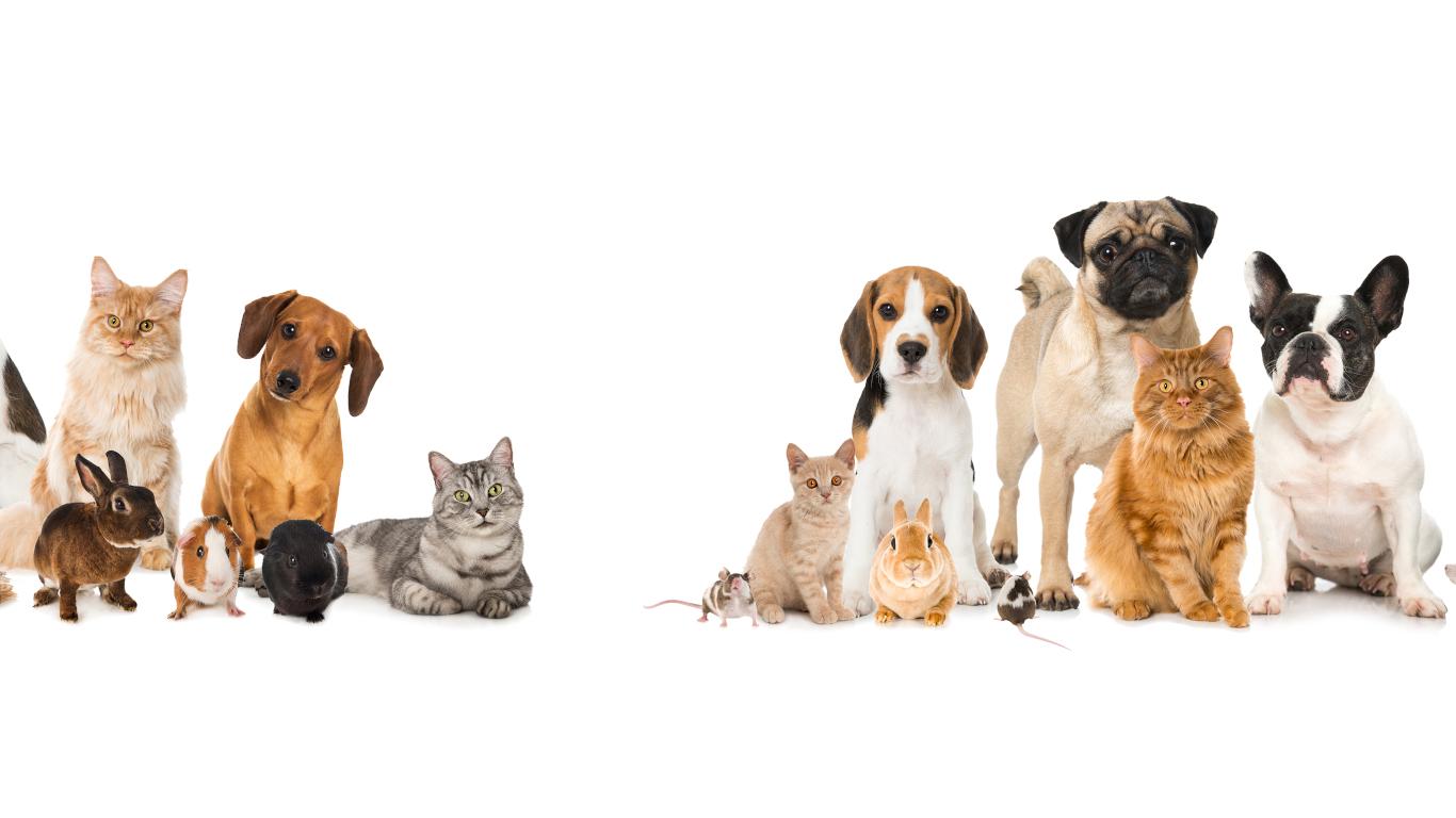 slider-conseiller-animalerie