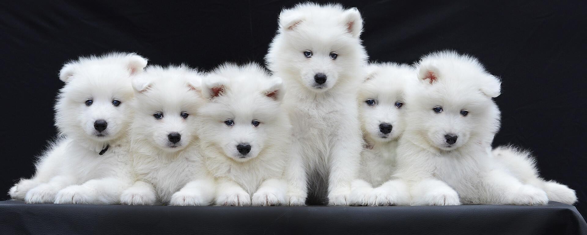 slider-eleveur-canin-felin