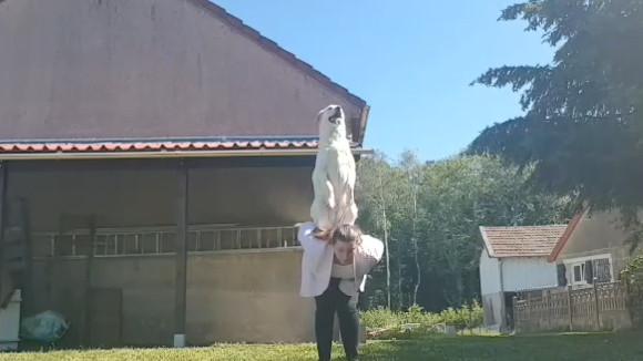 tutoriel éducation canine