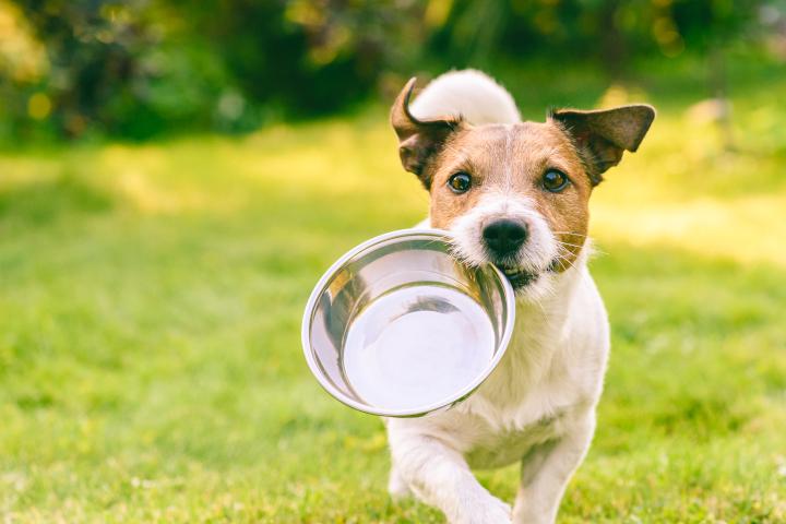 alimentation thérapeutique du chien
