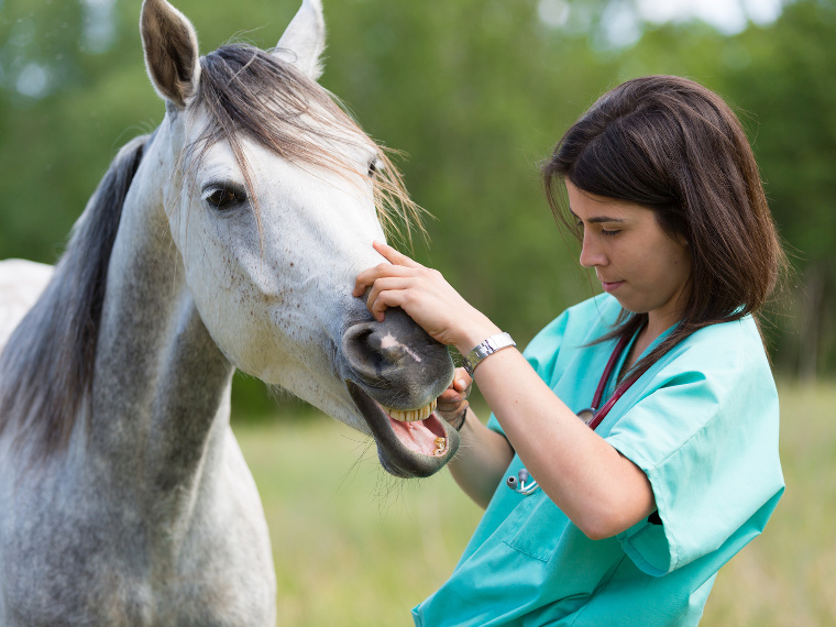 formations soins animaliers
