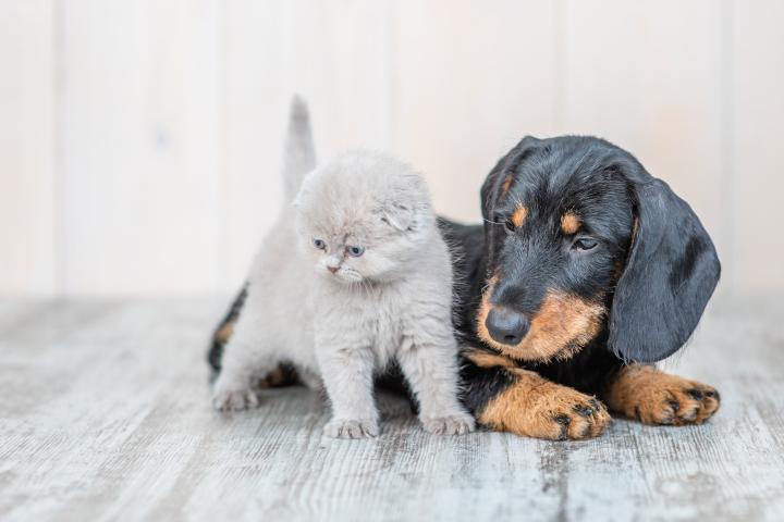 interdire la vente de chiens et chats