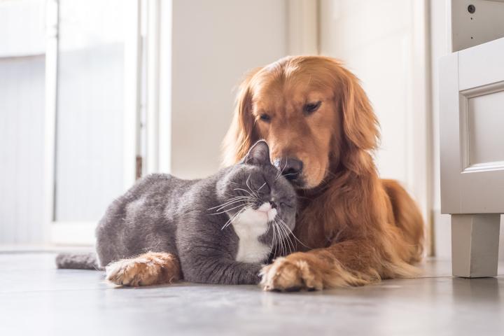 certificat de connaissances pour les futurs propriétaires d'animaux de compagnie