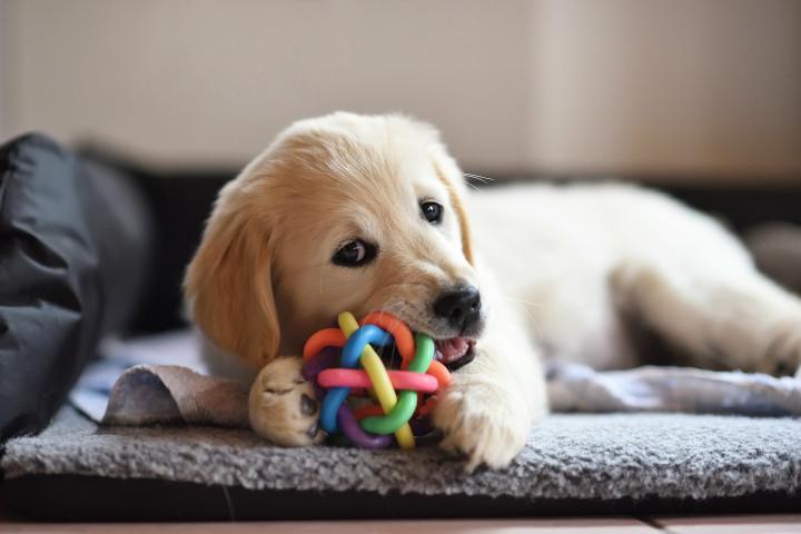 jouets adaptés pour les chiens